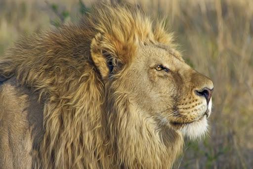 el hombre y el leon